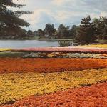 Lake Anna Park