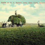Gathering Alfalfa on O.C. Barber's Anna Dean Farm, Barberton, Ohio
