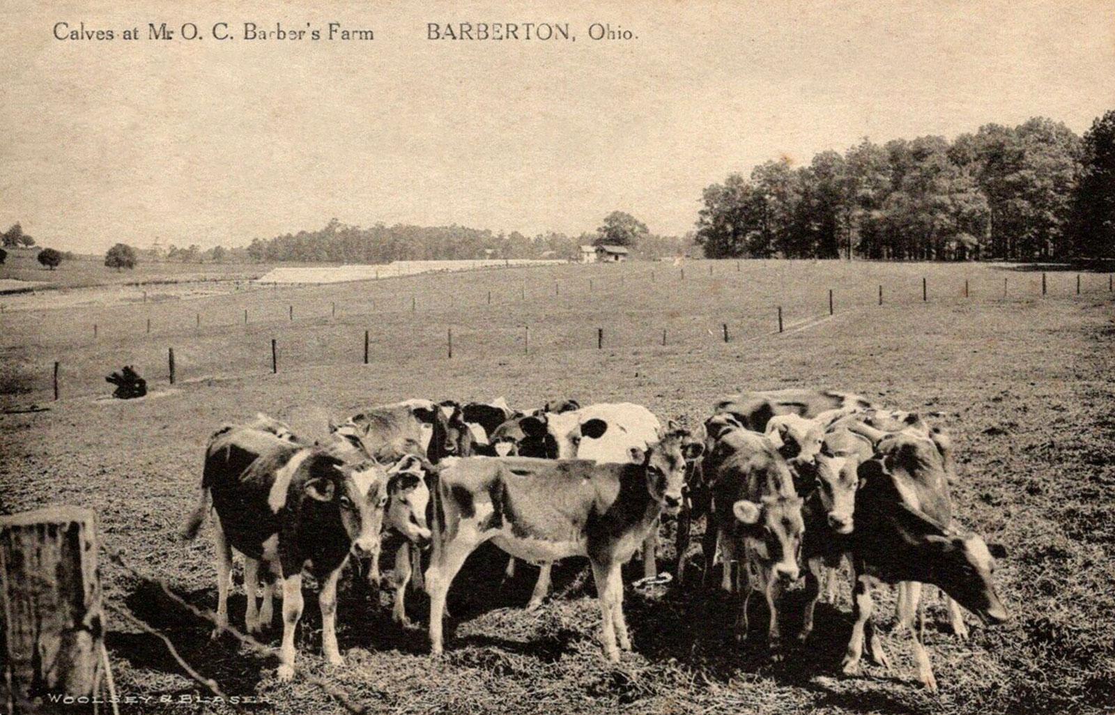 barberton-barber-farm-2